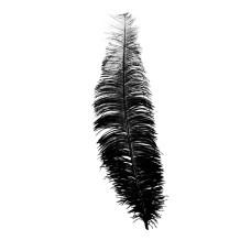 Piuma di struzzo nera